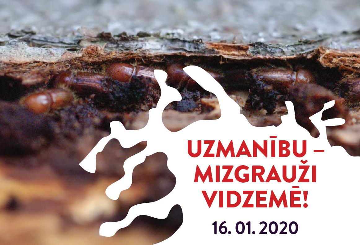 Uzmanību – Mizgrauži Vidzemē! Diskusija Āraišu Ezerpils arheoloğiskā parka apmeklētāju centrā